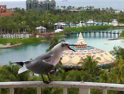 atlantis-resort-vacation-bahamas-bird12
